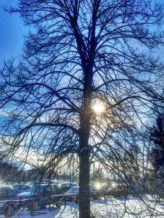 riflessi di luce nel parco
