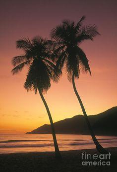 ✯ Tropical beach with palm trees at sunrise, Choroni, Venezuela