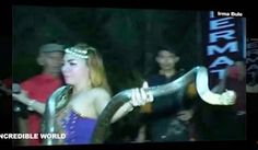 """""""O Grito do Bicho"""": Cantora morre no palco após ser picada por cobra e..."""