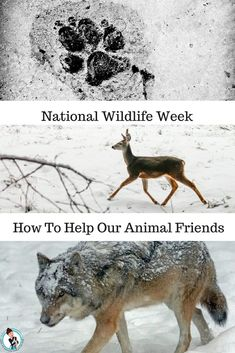 National Wildlife Week How To Help Our Animal Friends Every year, March 12 through 16 is National Wildlife Week. See What You Can Do To Help. #sponsored #wildlife #conservation #bluebuffalo #chewy #nature #animals  via @FashionBeyond40