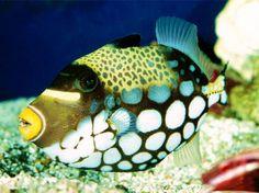 シーライフ30 珊瑚礁 自然 高解像度で壁紙