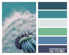 #patternpod #color #patternpodcolor #dandelion