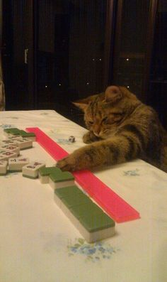 Playing Mahjong with my serious face on