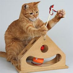 Pets are like kids: they love new stuff and they get bored easily. So, in looking for perfect pet gifts this year, I focused on pet toys that have the potential of holding your pet's attention for more than a few minutes on more than one occasion. Cool Cat Toys, Cool Cats, Toys For Cats, Interactive Cat Toys, Cat Supplies, Cat Furniture, Pet Gifts, Pet Shop, Crazy Cats