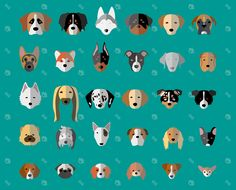 Dog Breeds on Behance
