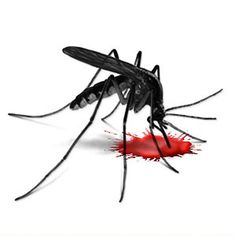 Europe approves the world's first malaria vaccine | www.health24.com