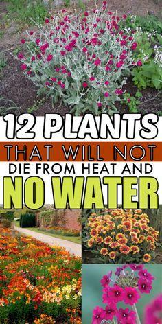 Shade Garden Plants, Water Plants, Shade Shrubs, Summer Plants, House Plants, Low Maintenance Landscaping, Low Maintenance Plants, Garden Yard Ideas, Lawn And Garden