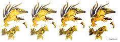 How to paint a gecko