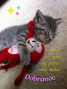 My Friend, Cats, Memes, Pictures, Animaux, Night, Photos, Gatos, Meme