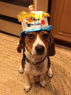84 Best Beagles Birthdays Images Beagle Beagle Puppy Beagles