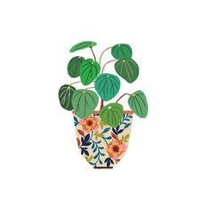 Pilea Giclee Print by Brie Harrison Plant Illustration, Botanical Illustration, Digital Illustration, Plant Painting, Painting & Drawing, Watercolor Paintings, Gouache, Sword Drawing, Interesting Drawings