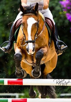 horses give us the wings we lack. Looks like u would be flying.... Almost.