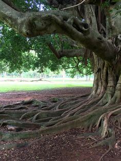 Árbol del jardín botánico. Asunción-Paraguay