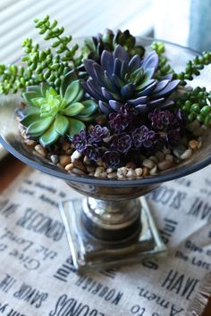55 creative DIY succulents ideas for you Page 35 of 55 Deko mit Suculentas Types Of Succulents, Succulents In Containers, Cacti And Succulents, Planting Succulents, Cactus Plants, Planting Flowers, Potted Plants, Growing Succulents, Succulent Care