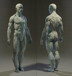 Digital humans: An interview with Chris Jones Zbrush Anatomy, Human Anatomy Drawing, Human Body Anatomy, Human Reference, Anatomy Reference, Art Reference Poses, Anatomy Models, Anatomy For Artists, Anatomy Sculpture