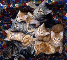 Come scegliere un gatto - Cane-Gatto