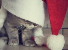 Lovely-KittyCats, all-things-bright-and-beyootiful: