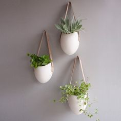 Minimalist's Garden- so cute!  They look like little purses of plants! :)