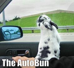 Car ride!