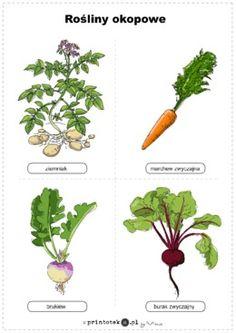 Rośliny okopowe. Ilustracja kolorowa - Printoteka.pl School Plan, Art School, Nature Crafts, Cute Crafts, Montessori, Herbs, How To Plan, Education, Learning