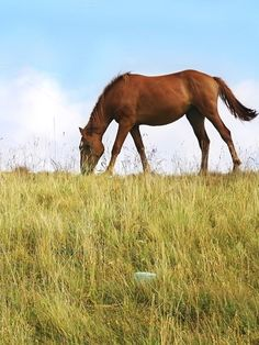 Grazing Horses by joyt on @creativemarket