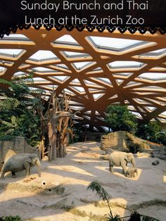 The Zurich Zoo has a fabulous Sunday brunch and Thai lunch that is wonderfully family friendly.