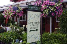 Bauman Farms, Gervais, Oregon