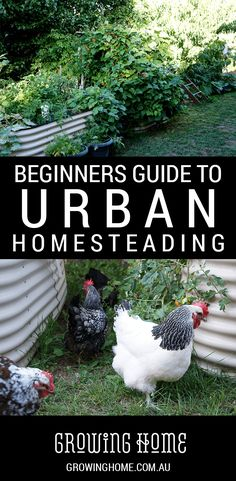Beginner's Guide to Urban Homesteading - Stephanie K. Lund - Beginner's Guide to Urban Homesteading This Beginners Guide to Urban Homesteading can help you answer some of your questions about growing, raising, cooking and preserving real food!
