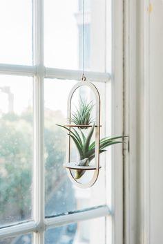 phyt air plants