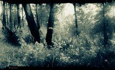 un bosque desde la particular visión de la cámara estenopeica