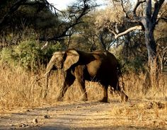 #southafrica #travels #africa South Africa, Elephant, Animals, Animales, Animaux, Elephants, Animal, Animais