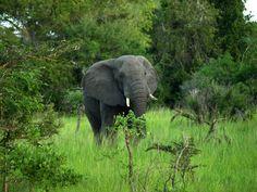Tanzania - Elephants are there too. Sky Full Of Stars, Tanzania, Elephants, Warm Weather, Safari, Places To Go, National Parks, Paradise, Waves