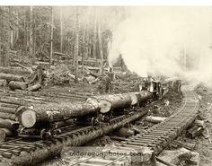 """Logging """"Roll Way"""", with Tracks, Yard & Steam Donkey - c. 1898"""