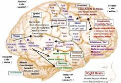Right side of brain, map