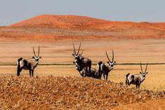 BEST OF   stefanforster.com, Namibia