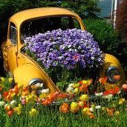 Unusual Flower Bed Ideas