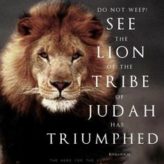 Lion Bible Verse, Bible Verses Quotes, Bible Scriptures, Lion Of Judah Jesus, Revelation 5, Lion Quotes, Lion And Lamb, Tribe Of Judah, Bible Promises