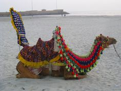 Karachi beach, Pakistan  cAMEL 4 RIDE