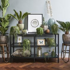 Plant decor crazy about plants and flower gardening идеи декора для дома, и Botanical Interior, Botanical Decor, Room With Plants, House Plants Decor, Modern Country, Blue Walls, Outdoor Walls, Interiores Design, Wall Design