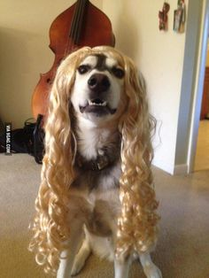 I got this wig for Halloween but I think it looks better on my dog.