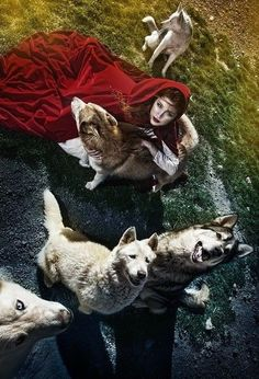 Little Red Riding hood and the wolves.