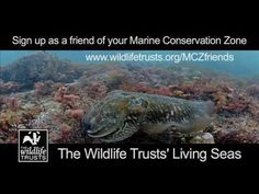 Featuring footage from dives at the Utopia proposed Marine Conservation Zone. Be inspired to help us protect the marine environment of Hampshire and the Isle. Marine Environment, Marine Conservation, Oceans, Exploring, February, Wildlife, Students, Link, Youtube