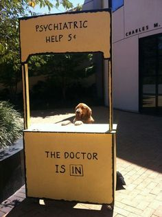 The Doctor Is In! Need a furry to set up shop at my work place!www.superstarpetservices.com