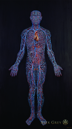 Cardiovascular System by Alex Grey Oil On Linen, 84 x 46 In. Alex Grey, Alex Gray Art, Grey Art, Anatomy Drawing, Human Anatomy, Sacred Geometry Tattoo, Circulatory System, Medical Illustration, Anatomy And Physiology