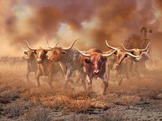 Western Images LTD specializes in selling western art prints for your home. Beautiful western limited editions, open editions, rugs, bits and spurs and books. Longhorn Cattle, Longhorn Steer, Gado, Barn Wood Frames, Texas Longhorns, Le Far West, Colour Images, Framed Art, Westerns