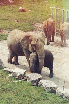 Rungwe et sa mère (: | 11 août 2014