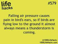 #579 Falling Air Pressure...