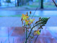 Mi flor, en un día de lluvia... colores fríos.
