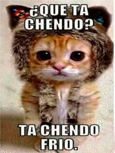 Imagenes Chistes y Memes – Memes - Mega Memeces Cute Baby Cats, Cute Little Animals, Cute Cats And Kittens, Cute Funny Animals, Kittens Cutest, Animal Jokes, Funny Animal Memes, Cat Memes, Funny Cats
