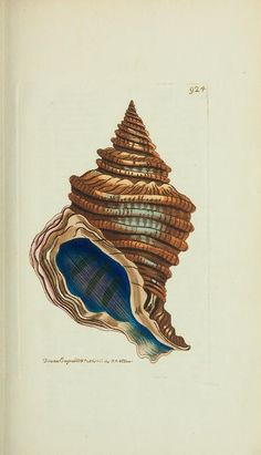 v.21 - The naturalist's miscellany, or Coloured figures of natural objects - 1789 to1813 | Biodiversity Heritage Library